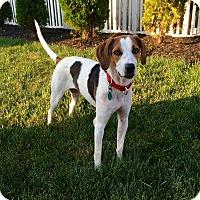 Adopt A Pet :: Mikko - New Oxford, PA