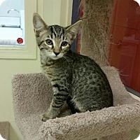 Adopt A Pet :: Murdock - Phoenix, AZ