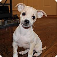 Adopt A Pet :: Newton - Bristol, CT