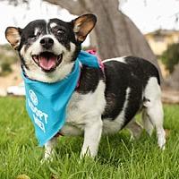 Adopt A Pet :: Daisy Maisy - Pacific Grove, CA