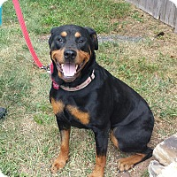 Rottweiler Mix Dog for adoption in Frederick, Pennsylvania - Olivia