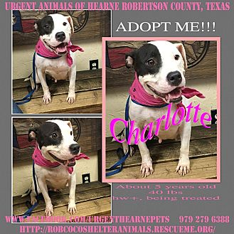 Pit Bull Terrier Mix Dog for adoption in Hearne, Texas - Charlotte