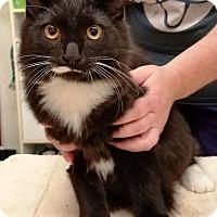 Adopt A Pet :: Alaska - Kalamazoo, MI