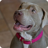Adopt A Pet :: Robyn - St. Charles, MO