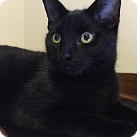 Adopt A Pet :: Opey - Rochester Hills, MI