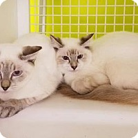 Adopt A Pet :: Bruce Lee & My Song - St. Cloud, FL