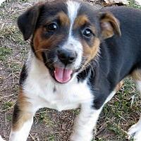 Adopt A Pet :: Sassy - Burbank, OH