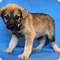 Adopt A Pet :: Brooklyn - Waldorf, MD