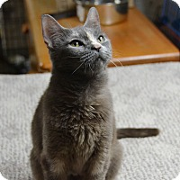 Adopt A Pet :: Cobalt - Brooklyn, NY