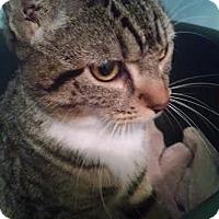 Adopt A Pet :: Zayda - Concord, NC