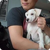 Adopt A Pet :: Lsa - Marlton, NJ