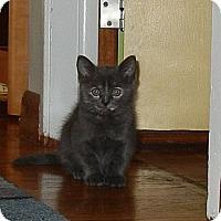 Adopt A Pet :: Aziza - Southington, CT