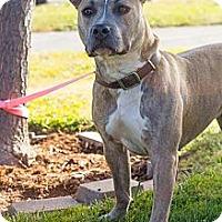 Adopt A Pet :: Shiloh - Sacramento, CA