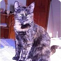 Adopt A Pet :: Sally - Reston, VA