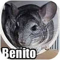 Adopt A Pet :: Benito - Virginia Beach, VA