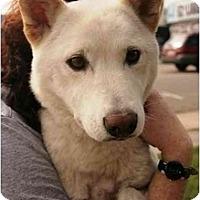 Adopt A Pet :: Abby - Marysville, CA