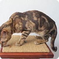 Adopt A Pet :: Marbles - Davis, CA