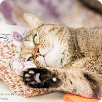 Adopt A Pet :: Charlie - Fountain Hills, AZ