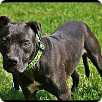 Adopt A Pet :: Eddie - Mount Juliet, TN
