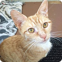 Adopt A Pet :: Lucky Penny - Youngstown, OH