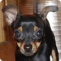 Adopt A Pet :: Crosby - MINNEAPOLIS, KS