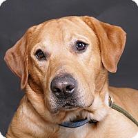 Adopt A Pet :: Hero - Sudbury, MA