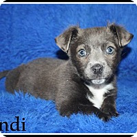 Adopt A Pet :: Bordentown NJ - Andi - New Jersey, NJ