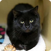 Adopt A Pet :: Melody - Kettering, OH