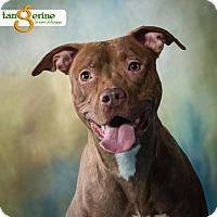 Adopt A Pet :: Nita - Mayer, MN