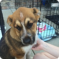 Adopt A Pet :: Archie - Hohenwald, TN