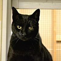 Adopt A Pet :: Lucky - Saginaw, MI