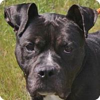Adopt A Pet :: Yogi - New Castle, DE