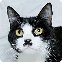 Adopt A Pet :: Tony N - Sacramento, CA