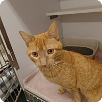 Adopt A Pet :: Thunder Cat - Crown Point, IN