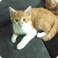 Adopt A Pet :: Jangle - Millersville, MD