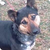 Adopt A Pet :: Queenie-courtesy posting - Minneapolis, MN