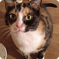 Adopt A Pet :: Gidget - Queensbury, NY
