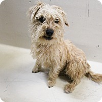 Adopt A Pet :: A11 Nadia - Odessa, TX