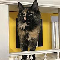 Adopt A Pet :: Jolene - Battle Creek, MI