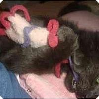 Adopt A Pet :: Ajax - Davis, CA