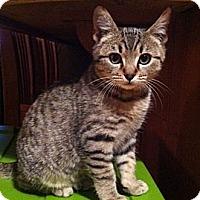 Adopt A Pet :: Ace - Lafayette, CA