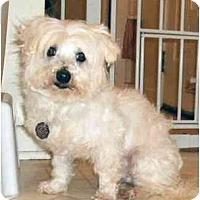Adopt A Pet :: Tucker - Mooy, AL