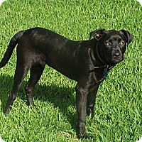 Adopt A Pet :: Theo - Hancock, MI