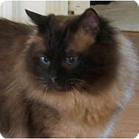 Adopt A Pet :: Solly - Keizer, OR