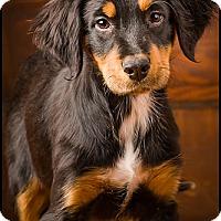 Adopt A Pet :: Wilson - Owensboro, KY