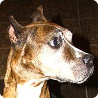 Adopt A Pet :: Mr. Biggs! - Sacramento, CA