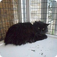 Adopt A Pet :: Emmie - white settlment, TX