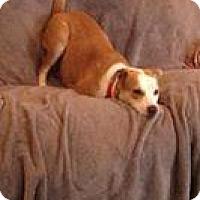 Adopt A Pet :: Hazel - Marlton, NJ