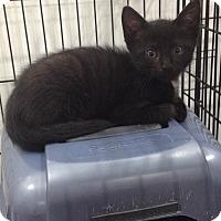 Adopt A Pet :: James - Speonk, NY
