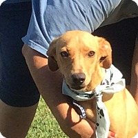 Adopt A Pet :: Derby - Rochester, NY